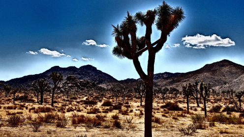 Joshua_Tree_NP001-1