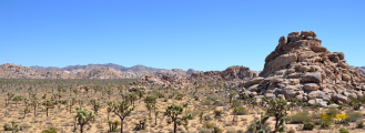 Joshua_Tree_NP003