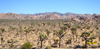 Joshua_Tree_NP004