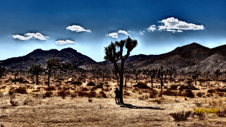 Joshua_Tree_NP005