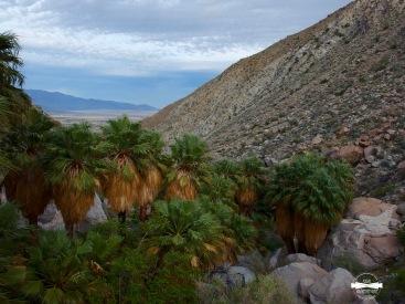 Hellhole Palm